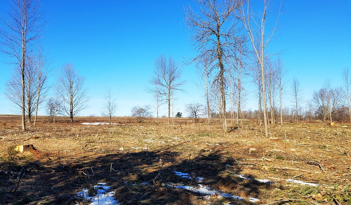 Pasture Cleared for a Local Organic Farm
